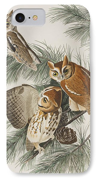 Little Screech Owl  IPhone Case by John James Audubon
