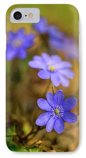 IPhone Case featuring the photograph Liverworts In The Afternoon Sunlight by Jaroslaw Blaminsky