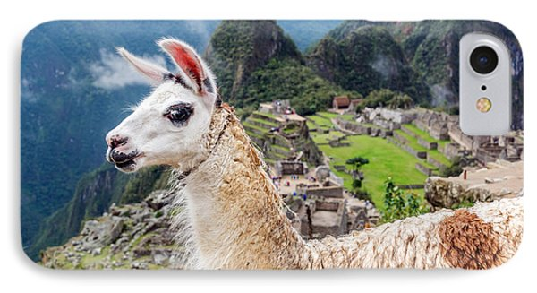 Llama At Machu Picchu IPhone Case by Jess Kraft
