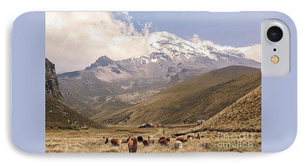 Llamas Grazing At The Foot Of The Chimborazo Volcano IPhone Case