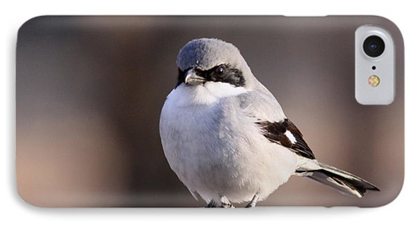 Loggerhead Shrike - Smokey IPhone Case
