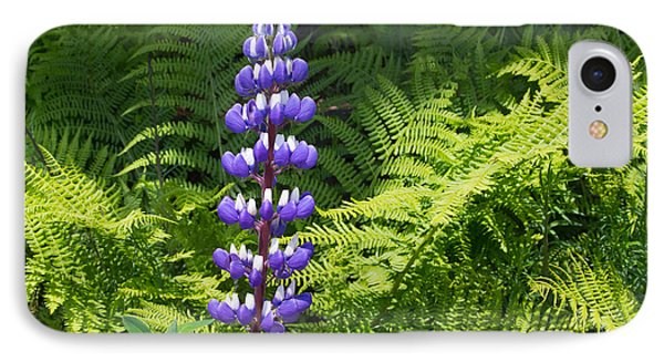Lone Blue Lupine IPhone Case by Allan Levin
