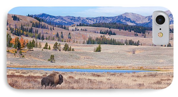 Lone Bull Buffalo IPhone Case by Cindy Singleton