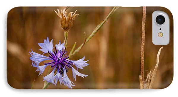 Lone Cornflower IPhone Case by David Isaacson