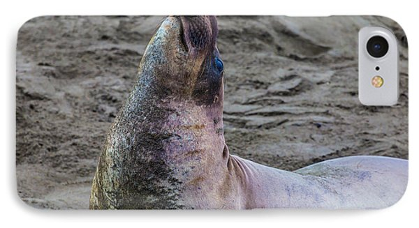 Lone Elephant Seal IPhone Case