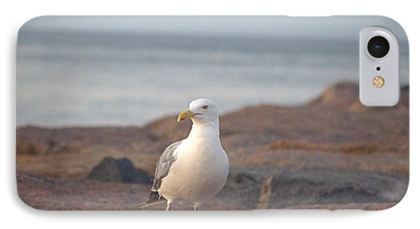 IPhone Case featuring the photograph Lone Gull by  Newwwman