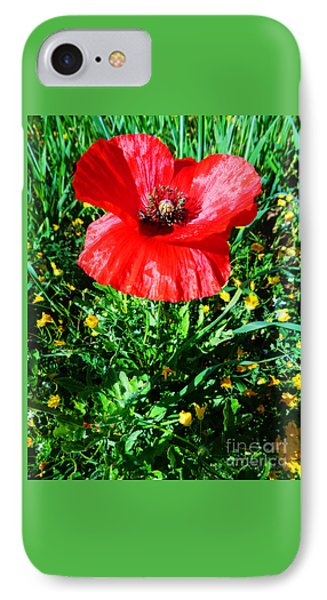 Lonely Poppy IPhone Case by Don Pedro De Gracia