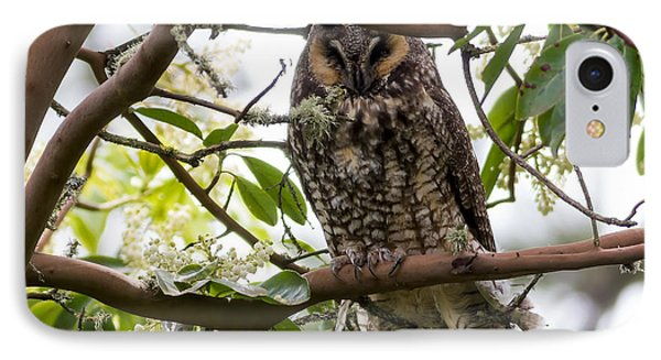 Long-eared Owl Phone Case by David Gn