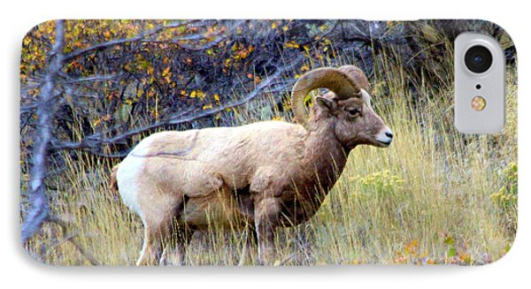 IPhone Case featuring the photograph Long Horns Sheep by Irina Hays
