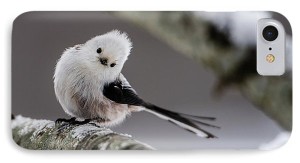 Long-tailed Look IPhone Case by Torbjorn Swenelius