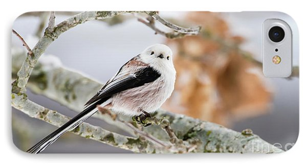 IPhone Case featuring the photograph Long-tailed Tit by Torbjorn Swenelius
