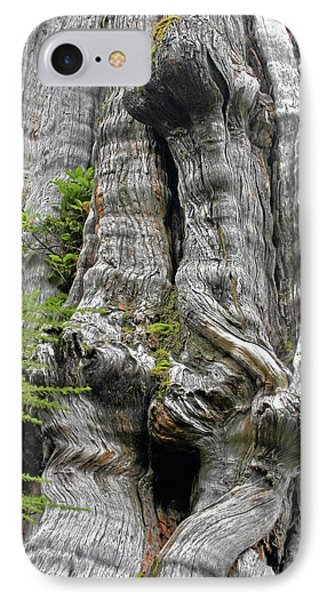 Long Views - Giant Western Red Cedar Olympic National Park Wa Phone Case by Christine Till