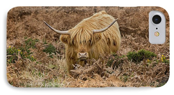 Longhorn On Dartmoor IPhone Case