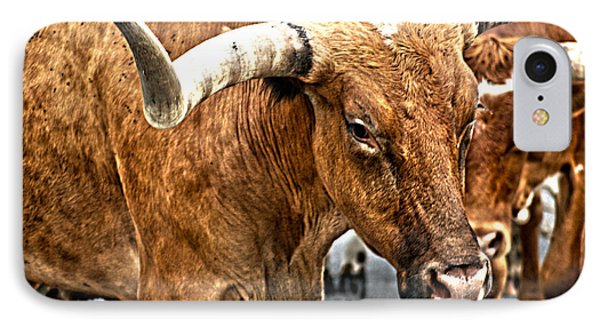 Longhorns IPhone Case by Toni Hopper