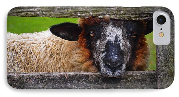 Lookin At Ewe IPhone Case by Skip Hunt