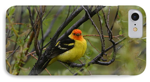 Looking At You - Western Tanager IPhone Case