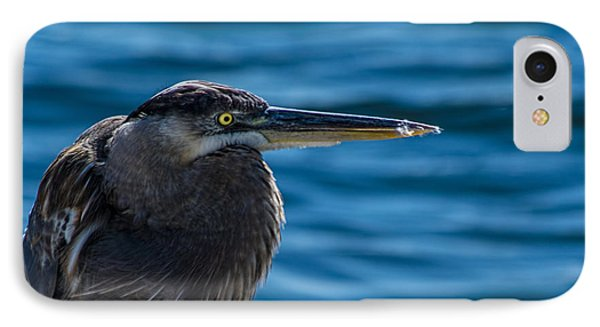 Looking For Lunch IPhone 7 Case by Marvin Spates