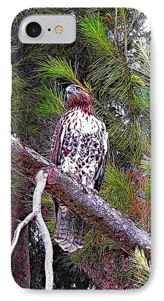 Looking For Prey - Red Tailed Hawk IPhone Case by Glenn McCarthy Art and Photography