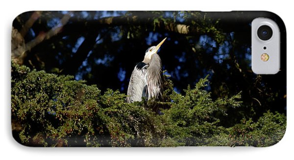 IPhone Case featuring the photograph Lost Lagoon Great Blue Heron 5 by Terry Elniski