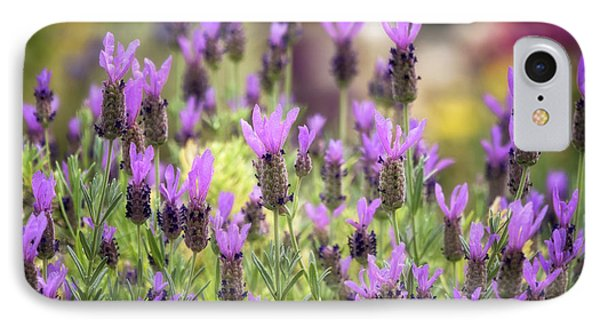 IPhone Case featuring the photograph Lots Of Lavender  by Saija Lehtonen