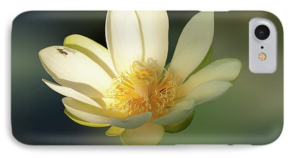 Lotus Beauty IPhone Case by Carolyn Dalessandro