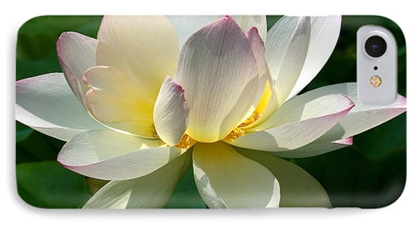 Lotus Beauty--disheveled Dl061 IPhone Case by Gerry Gantt
