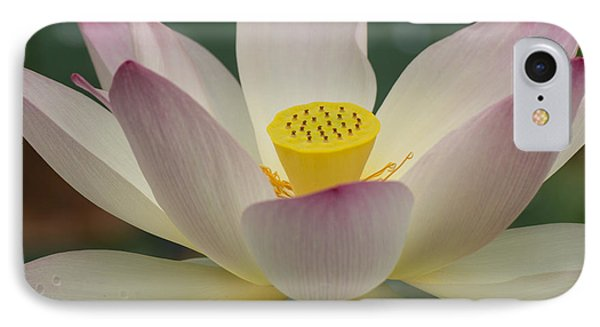 IPhone Case featuring the photograph Lotus Beauty by Julie Andel