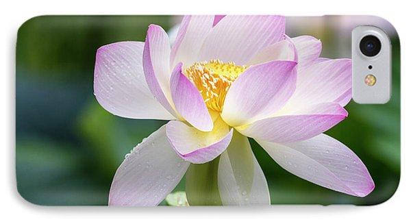 Lotus IPhone Case by Edward Kreis