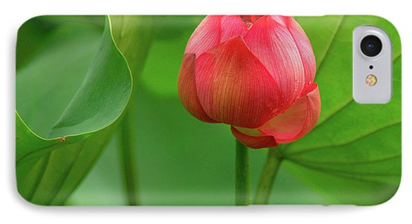 IPhone Case featuring the photograph Lotus Flower by Harry Spitz