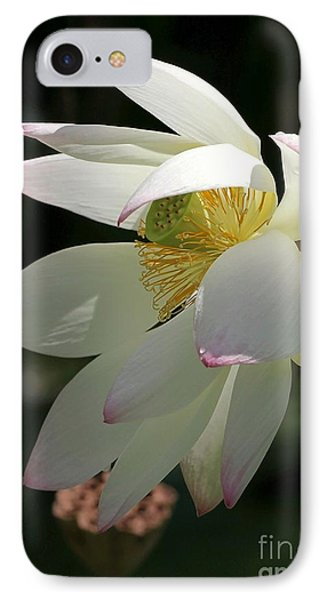 Lotus Under Cover Phone Case by Sabrina L Ryan