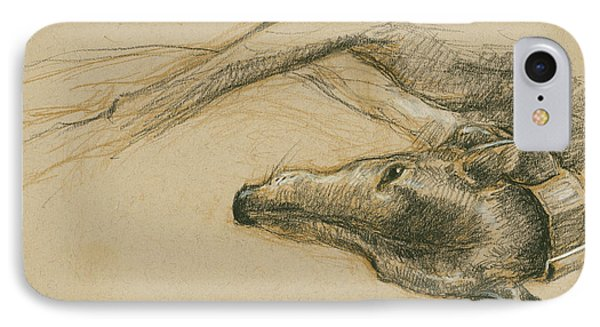 Lounging Greyhound IPhone Case by Tracie Thompson