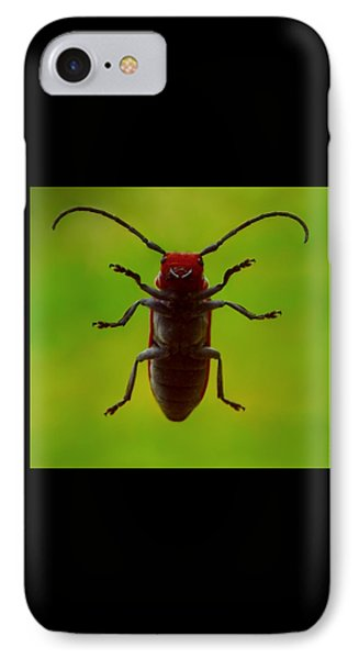 Love Bug IPhone Case by Danielle R T Haney