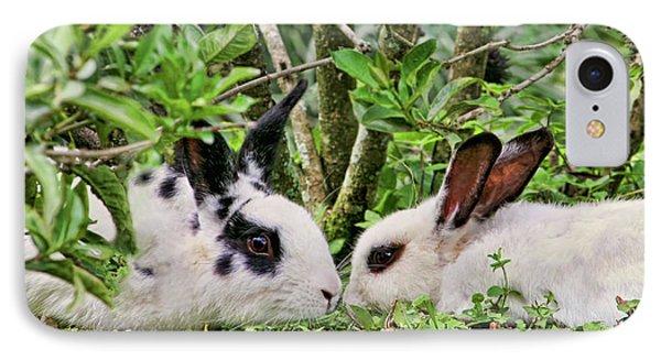 Love Bunnies In Costa Rica IPhone Case