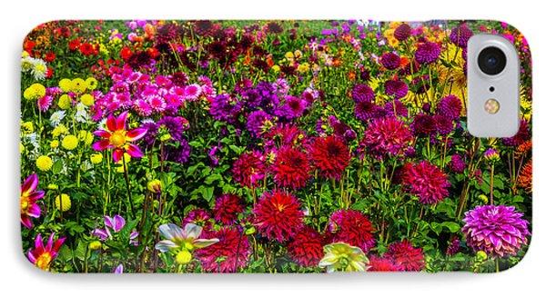 Lovely Dahlia Garden IPhone Case by Garry Gay