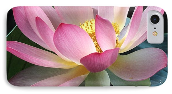Lovely Lotus IPhone Case by Elvira Butler