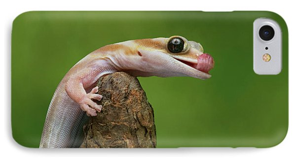 IPhone Case featuring the photograph Lovely Water - Velvet Gecko by Nikolyn McDonald