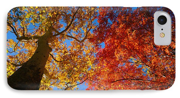 Low Angle View Of A Sycamore Tree IPhone Case by Panoramic Images