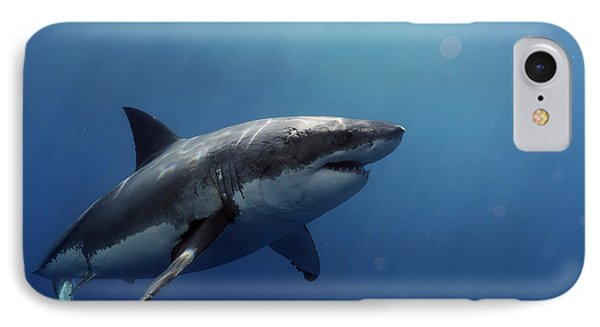 Lucy Posing At Isla Guadalupe IPhone 7 Case by Shane Linke