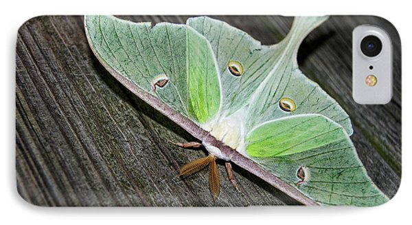 Luna Moth Phone Case by Amber Flowers