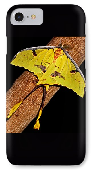 IPhone Case featuring the photograph Luna Moth by Judy Vincent