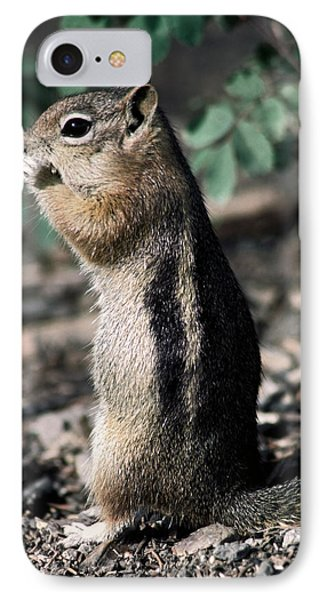 Lunchtime For Ground Squirrel IPhone Case by Sally Weigand