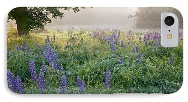 Lupine Field IPhone Case by Susan Cole Kelly