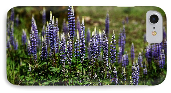 Lupine In Montana 2 IPhone Case