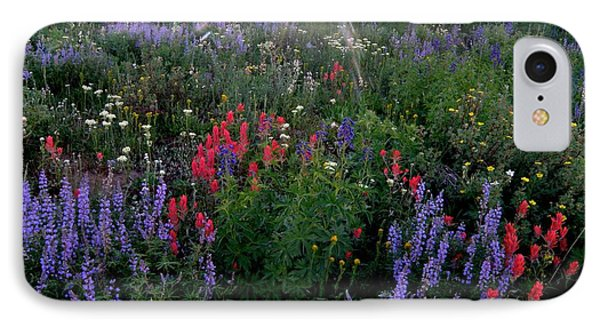 Lupines And Sun IPhone Case