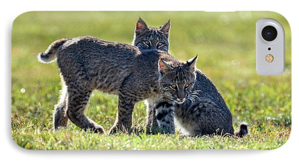 Lynx Kittens IPhone Case by Amy Porter