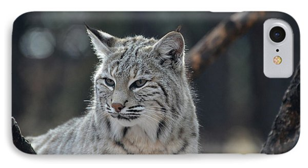 Lynx With A Very Unhappy Face IPhone Case