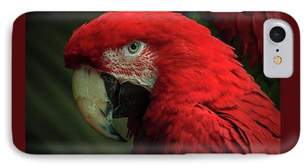 Macaw Portrait IPhone Case by Joni Eskridge
