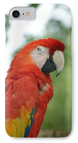 IPhone Case featuring the photograph Macraw by Heidi Poulin