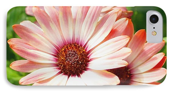 Macro Pink Cinnamon Tradewind Flower In The Garden IPhone Case