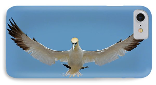 IPhone Case featuring the photograph Maestro by Tony Beck
